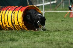 Agility tunnel Royalty Free Stock Photography