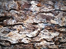 Aging, Bark, Brown royalty free stock photo