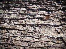 Aging, Bark, Detail royalty free stock image