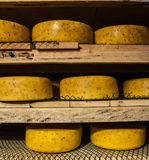 Aging cheese at cheese factory Royalty Free Stock Images