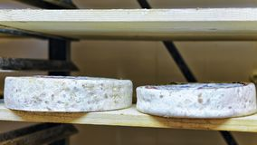 Aging Cheese at maturing cellar Franche creamery Royalty Free Stock Photography