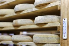 Aging Cheese at the maturing cellar Franche dairy Comte Royalty Free Stock Images