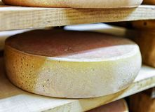 Aging Comte Cheese at ripening cellar in Franche Comte dairy Royalty Free Stock Photo