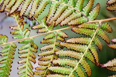 Aging fern leaves macro view. Beautiful abstract floral pattern photography. Selective focus.  Royalty Free Stock Images