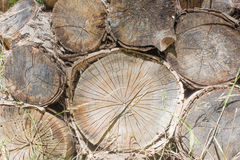 Aging Firewood Piled On Ground Stock Photography