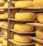 Aging Gouda Cheese Stock Images