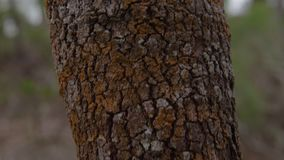 Aging tree trunk in close up. A macro shot of a tree trunk. The trunk is saturated with different colors in the shade of brown stock video footage