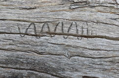 Aging wood log with wriggly animal mark Stock Image