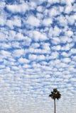 aginst altocumulus tła chmury drzewko palmowe Obrazy Stock