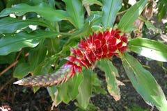 Aginst rojo de la flor el fondo Fotos de archivo libres de regalías