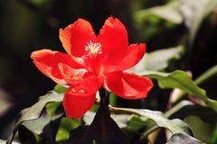 Aginst rosso del fiore i precedenti Fotografie Stock