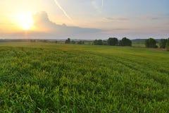 Agircutural krajobraz w świetle słonecznym Obraz Stock