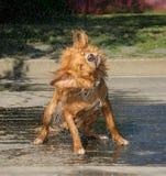 Agitação do cão fotografia de stock