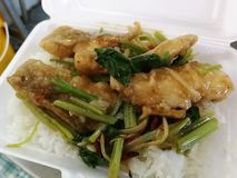 A agitação fritada friável dos peixes com folhas do aipo serviu com arroz Imagem de Stock