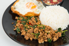 A agitação picante fritada tritura a carne de porco com folhas e ovo frito da manjericão Fotos de Stock
