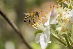 Agitación de la primavera Fotos de archivo