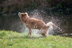 Agitando a água Fotografia de Stock