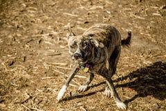 Agitazione del cane immagini stock