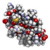 Agitoxin scorpion toxin. Neurotoxin present in deathstalker scor Stock Images