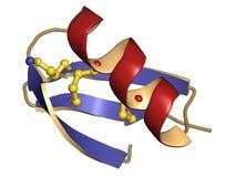 Agitoxin scorpion toxin. Royalty Free Stock Photo