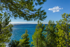 Żaglówka przy morzem z sosnami w przedpolu Fotografia Stock