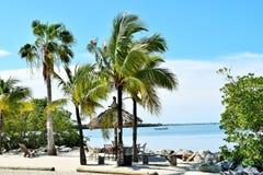 Żaglówki i drzewka palmowe Zdjęcie Stock