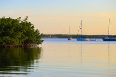 Żaglówki i mangrowe Fotografia Stock