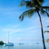 żaglówki palmowe drzewne Zdjęcia Royalty Free