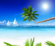 Żaglówki Wyrzucać na brzeg drzewka palmowego pojęcie Zdjęcia Stock