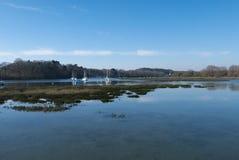 Żaglówki zakotwiczali w Morbihan zatoce, wyspa Conleau, brytyjczyk Obrazy Royalty Free