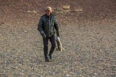Agle myśliwy, podczas gdy tropiący trzymający łowieckiego trofeum nieżywego krwistego królika w pustynnej górze Zachodni Mongolia Zdjęcia Stock