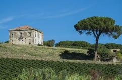 Free Aglianico Lands Stock Image - 34824531