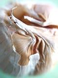 aglio Fotografie Stock