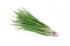 Aglio della erba cipollina Immagine Stock