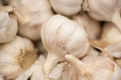 Aglio, aglio fresco - aglio rosso, fondo del gruppo dell'aglio, fondo dei chiodi di garofano di aglio Immagine Stock