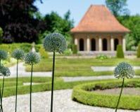 Aglio ornamentale ( Allium karataviense) in un giardino barrocco davanti ad un padiglione deliberatamente vago fotografie stock