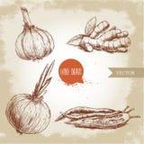 Aglio, radice dello zenzero, cipolla e peperoncini roventi Immagini Stock