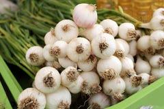 Aglio verde - ingrediente di alimento piccante naturale fresco fotografie stock libere da diritti