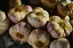 Aglio viola e rosa francese fresco dalla Provenza, Francia fotografia stock