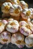 Aglio viola e rosa francese fresco dalla Provenza, Francia immagine stock