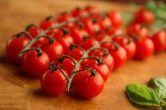 Aglomere um tomate imagem de stock