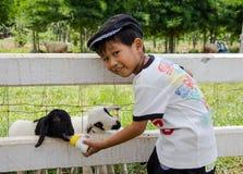 Agneau de alimentation de garçon asiatique Images libres de droits
