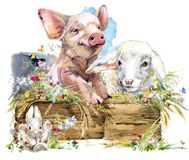 Agnello Maiale sveglio Chiken Coniglio raccolta di animale da allevamento dell'acquerello illustrazione di stock