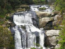 Agnes Falls Hazel Park Victoria arkivfoto