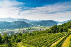 Agno, Zwitserland Mening van Agno, Meer Lugano, Lugano Luchthaven, wijngaarden op de heuvels die, op een mooie de zomerdag omring Stock Foto's
