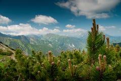 Ago della montagna Fotografia Stock Libera da Diritti