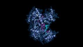Ago2 lié par ARN, modèle tournant illustration stock