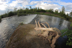 Agogna River fish eye Royalty Free Stock Photos