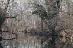 Agogna rzeka Zdjęcia Royalty Free