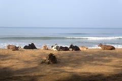 Agonda, Goa, Индия Стоковые Фото